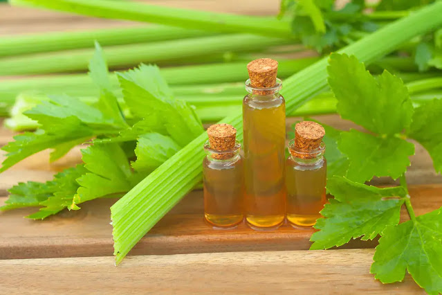 The essential oil of celery