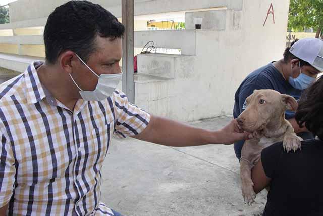 Avanza vacunación en Dzilam González: inmunizadas 460 mascotas