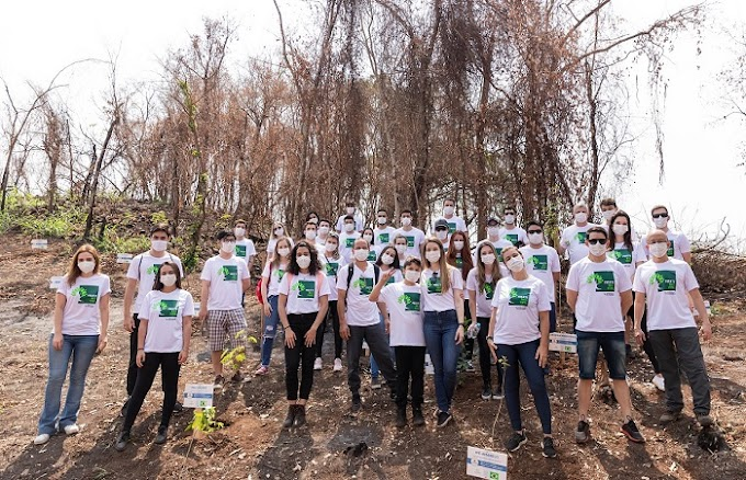 Projeto Mais Verde: voluntários plantam árvores em Londrina (PR)