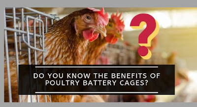 7 Benefits of Poultry Battery Cages for Chicken Production