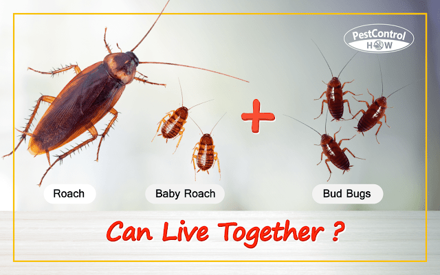 can-bed-bugs-and-roaches-live-together
