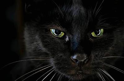 Fotos de los ojos coloridos de gatos negros