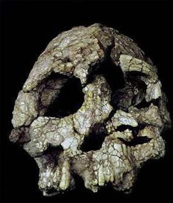 fossil skull of Orrorin tugenensis