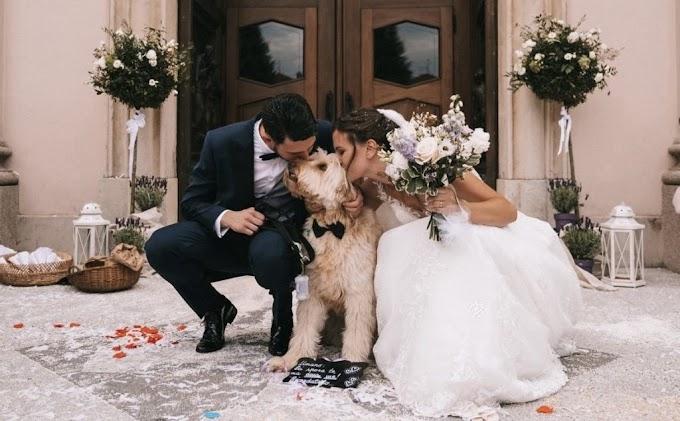 Moda e animali: nasce la prima linea sposi per gli amici a 4 zampe