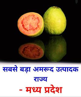 पढ़े हिंदी में कौन से राज्य कौन से फल का सबसे ज्यादा उत्पादन करते हैं