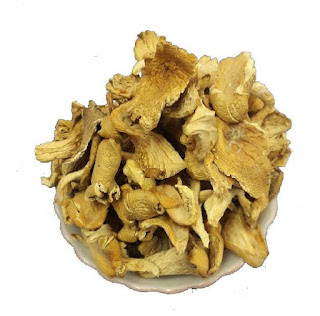 Dried oyster mushroom for sale