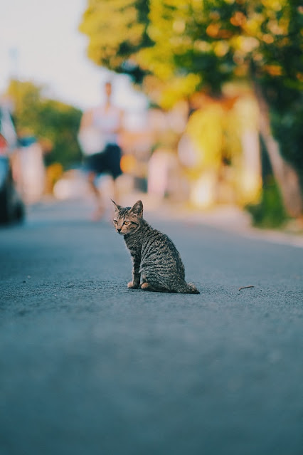 Cara Merawat Kucing Kampung Agar Berbulu Lebat dan Sehat