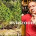 Χασισοφυτεία στη Τριάδα: Ο Ανακριτής Χαλκίδας άφησε ελεύθερη την Αλβανίδα καλλιεργήτρια και μέλος εγκληματικής οργάνωσης με συνήγορο τον «γνωστό» Θανάση Τάρτη (ΦΩΤΟ & ΒΙΝΤΕΟ)