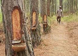 Jenis Hasil Hutan Bukan Kayu