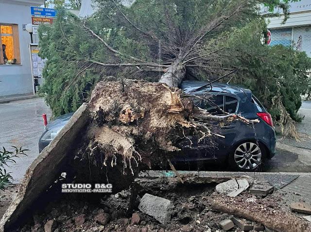 Έπεσε δέντρο πάνω σε αυτοκίνητο στο Άργος