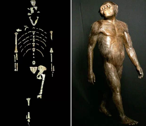 Montagem de fotos mostra o esqueleto de Lucy e um modelo tridimensional do Australopithecus afarensis - University of Texas at Austin via AP - AP Photo - Pat Sullivan