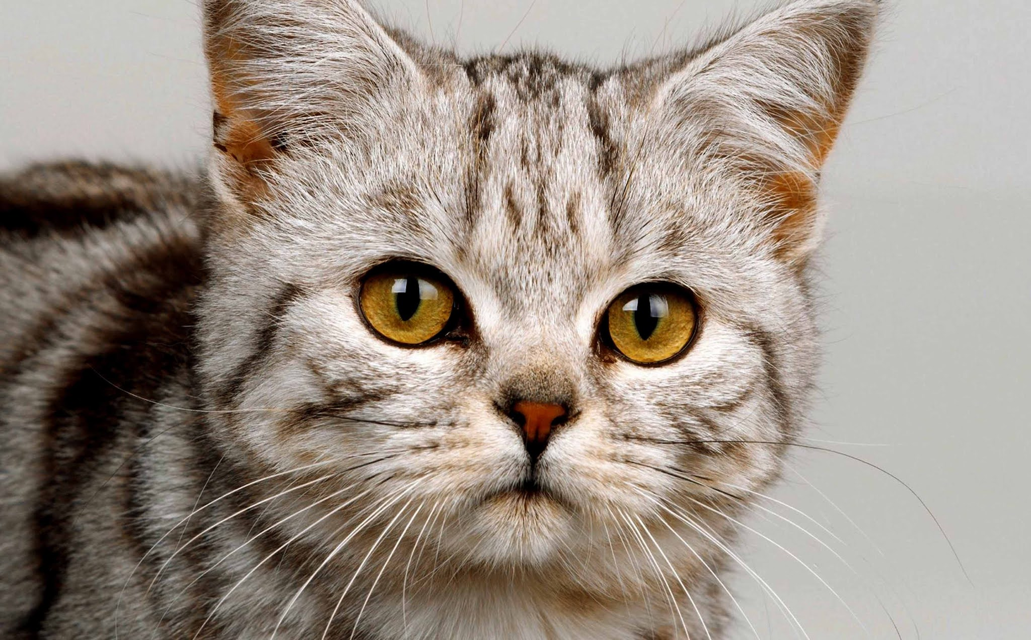 Free Wallpaper image kitten, cat, grass, walk, cute wallpaper, background Ultra HD 4K 5K 8K for Computer Desktop or Laptop