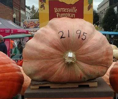 Four Guinness World Records broken at giant vegetable contest in Britain