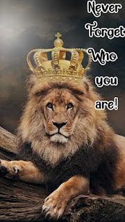 hd lion quotes motivational wallpaper