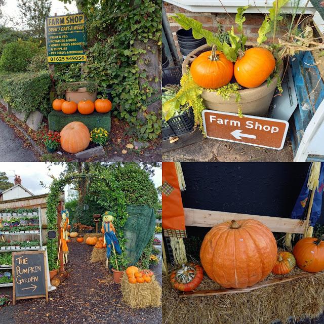 Pumpkins at a Farm Shop in Handforth