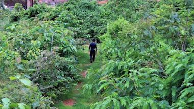 Método Miyawaki y los pequeños bosques urbanos para impulsar la biodiversidad en las ciudades
