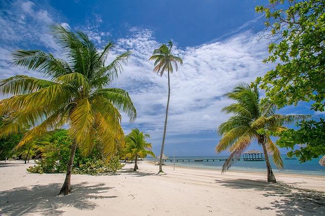 palmetto tree vs palm tree