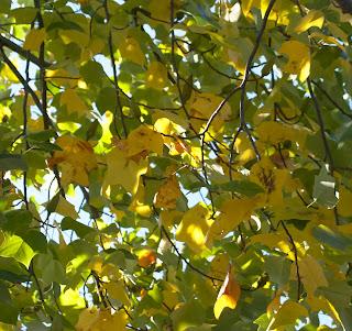 #herbst #blätter #autumn #nature #germany #natur #photography #leaves #naturephotography #deutschland #fall #wald #landscape #baum #love #fotografie #photooftheday #travel #laub #picoftheday #bäume #instagood #bayern #sonne #grün #sun #tree #wanderlust #blumen #blatt