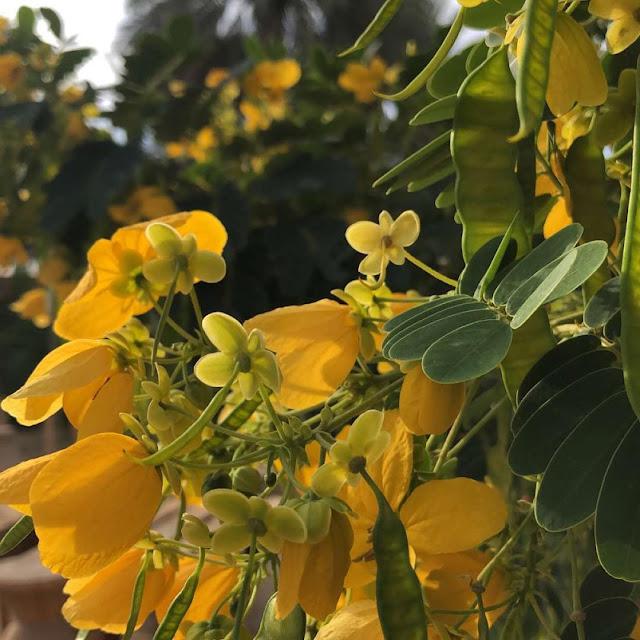 شركة الطارق لزراعة جميع أنواع الزهور والنباتات في جدة