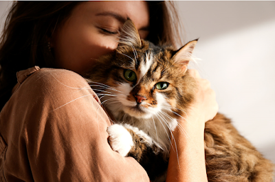 Cat Adoption Guide for Beginners
