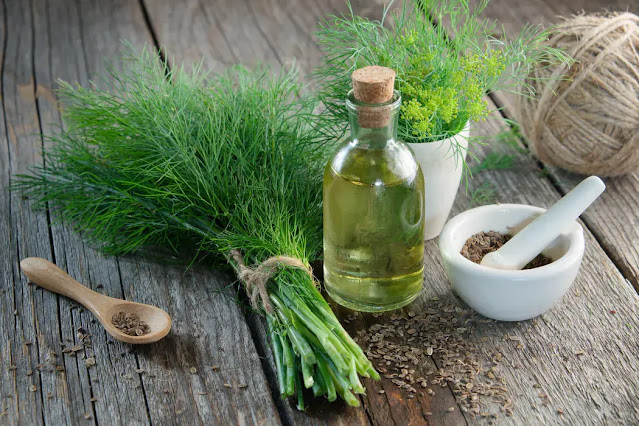 The essential oil of dill