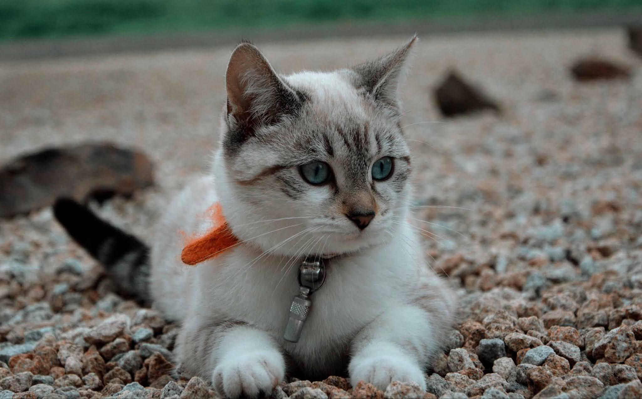 21 wallpaper image kitten, cat, glance, cute wallpaper, background Ultra HD 4K Desktop Computer