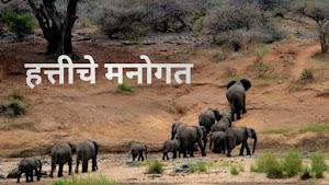 सर्कशीतील हत्तीचे मनोगत - हत्तीचे मनोगत मराठी निबंध