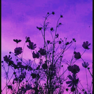 Aesthetic Lavender