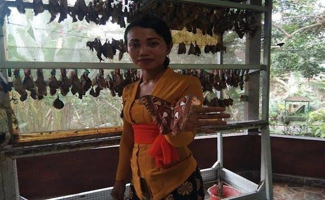 Lowongan Budidaya Kupu-kupu Aceh