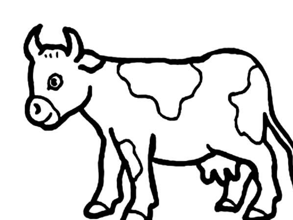 cow pictures for kids