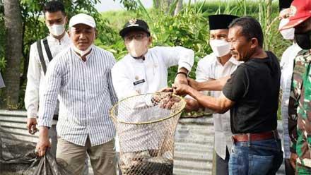 Panen Perdana Pekerjaan Percontohan Budidaya Ikan Nila