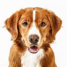 Dog Face Net Worth, Income, Salary, Earnings, Biography, How much money make?