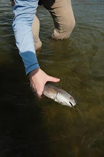 Texas Coast, Fly Fishing the Coast, Redfish on the fly, fly fishing for Redfish, Texas Coast fly fishing, Texas fly fishing, fly fishing texas