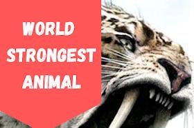 The world's strongest animals 2021