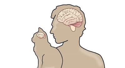 Cerebro de gato y cerebro humano: ¿Cuáles son las similitudes y diferencias?