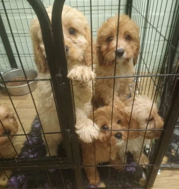 Dog Breeder Who Neglected At least 117 Puppies Is Banned From Keeping Animals