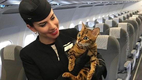 campanha pede animais viajem aviao donos