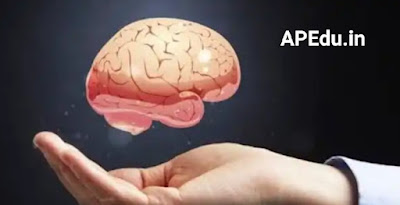 Explanation of what to eat to keep the brain healthy