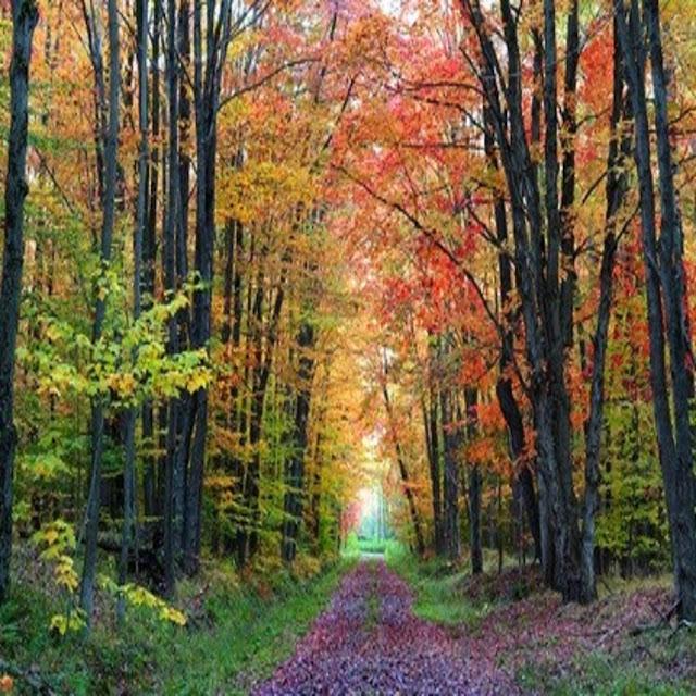 Kinzua Hiking Trails