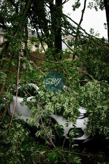 mobil tertimpa pohon
