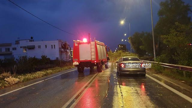 Έκλεισε η οδός Άργους Ναυπλίου από πτώσεις δέντρων
