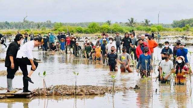 Presiden Jokowi Tanam Mangrove Bersama  Masyarakat di Tana Tidung