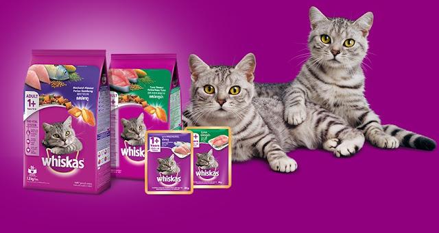 Cara Memberikan Makanan Kucing Whiskas Basah