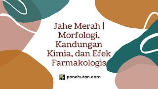Jahe Merah   Morfologi, Kandungan Kimia, dan Efek Farmakologis