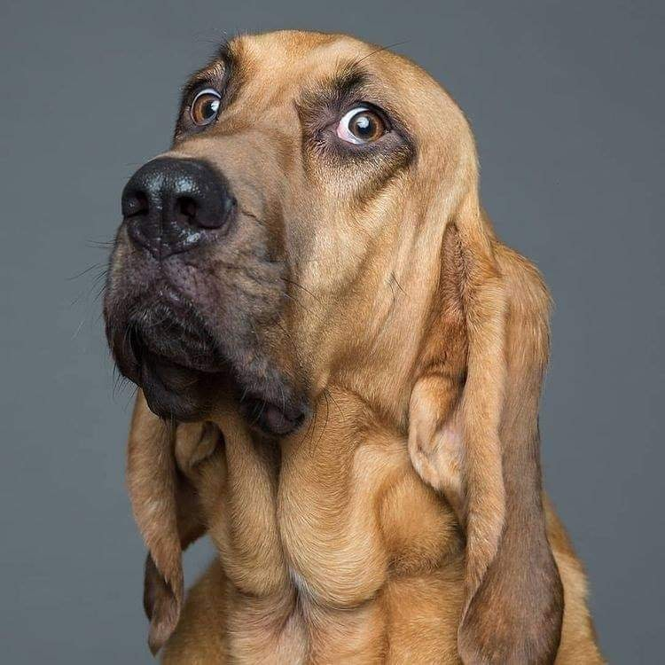 Amusing dog Expression