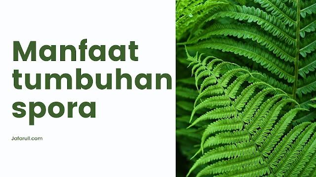 Manfaat tumbuhan spora