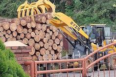 Polres Samosir  Tindaklanjuti, Ober Gultom Minta Dinas LHK Lakukan Audit Penebangan Pohon Pinus di Marlumba