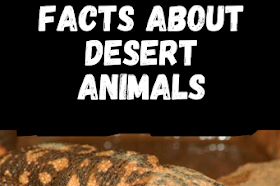 Interesting facts about desert animals