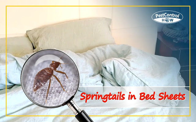 springtails-in-bed-sheets