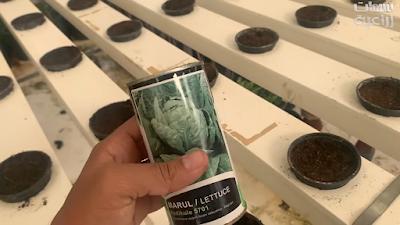العبوة الخاصة ببذور الخس البلدي